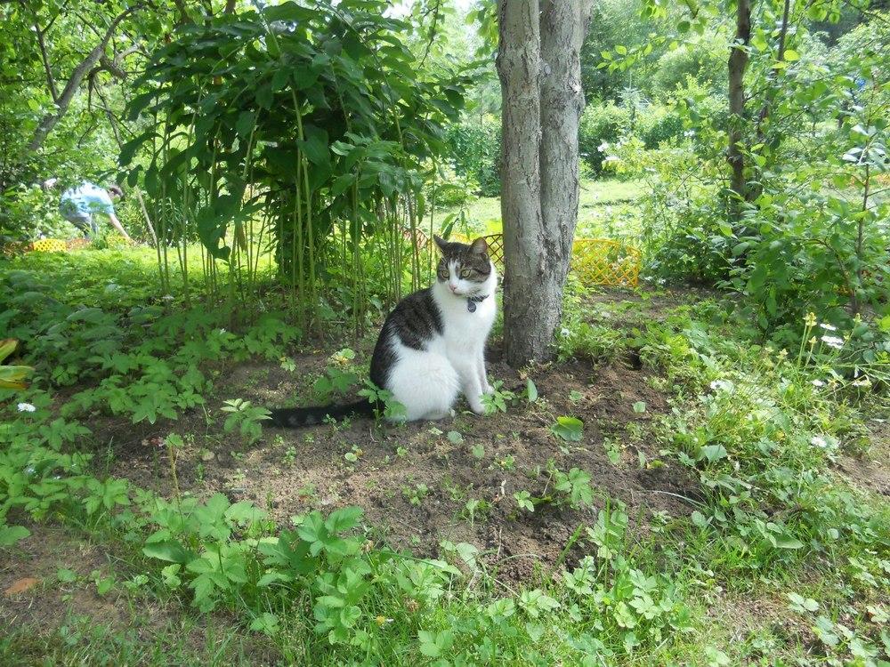 Кот мистика