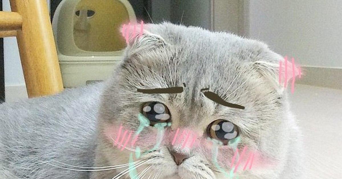 картинка котенок плачет