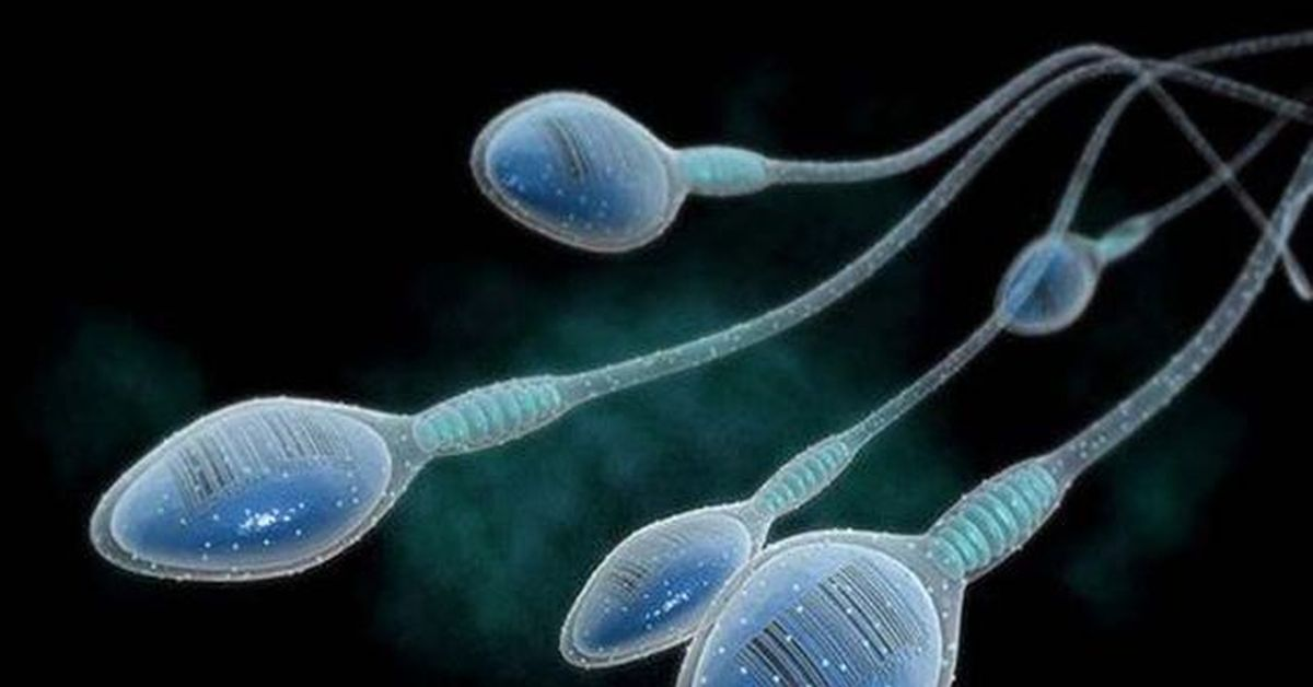Sperm count and testosterone