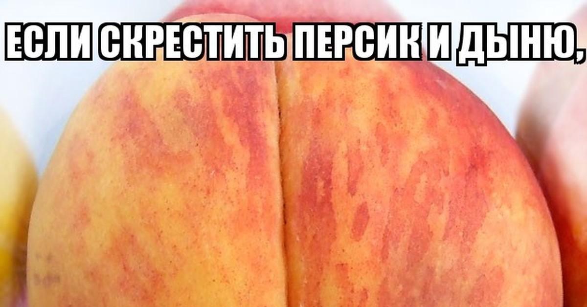 персик и спотти