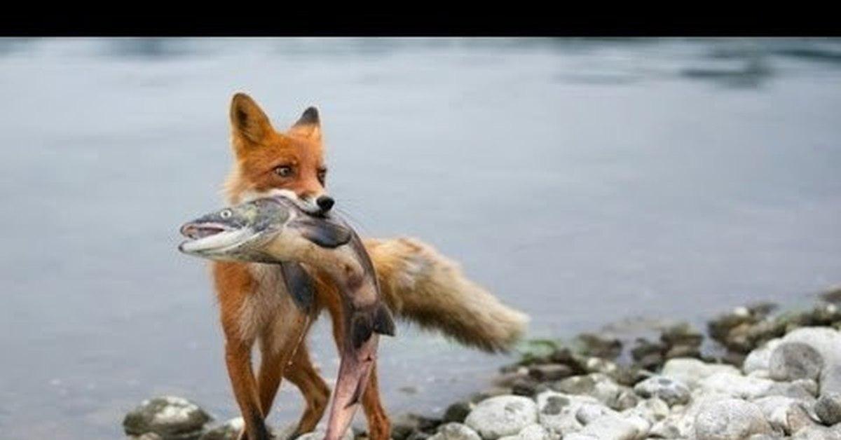 рыбалка с домашними животными