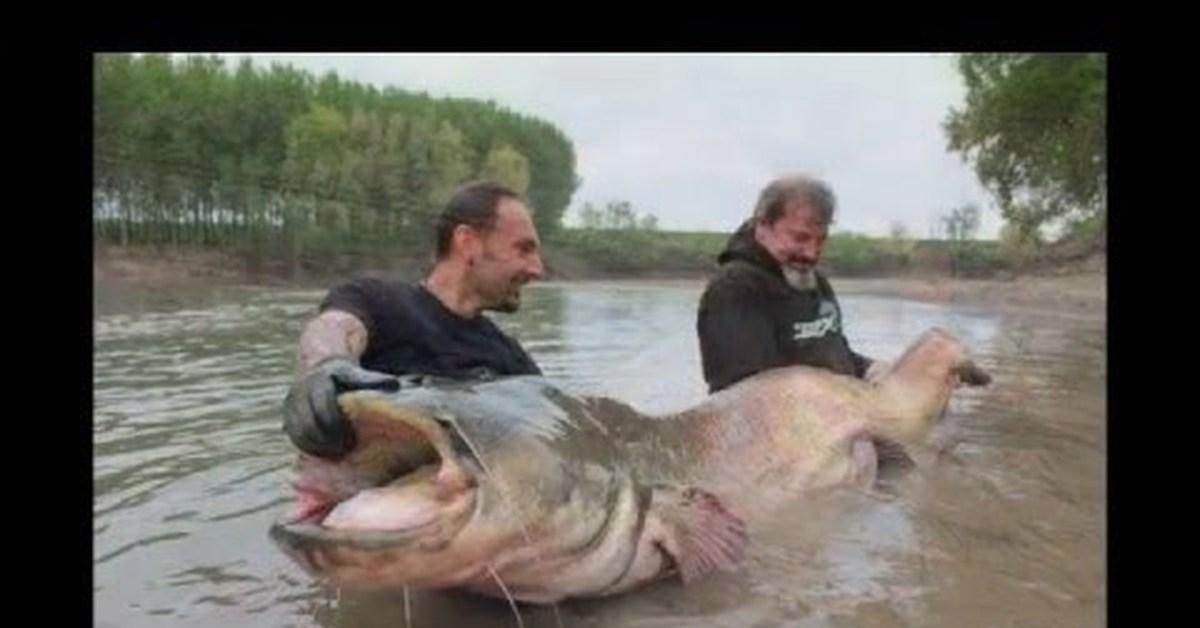 одноклассники рыбалка на сома