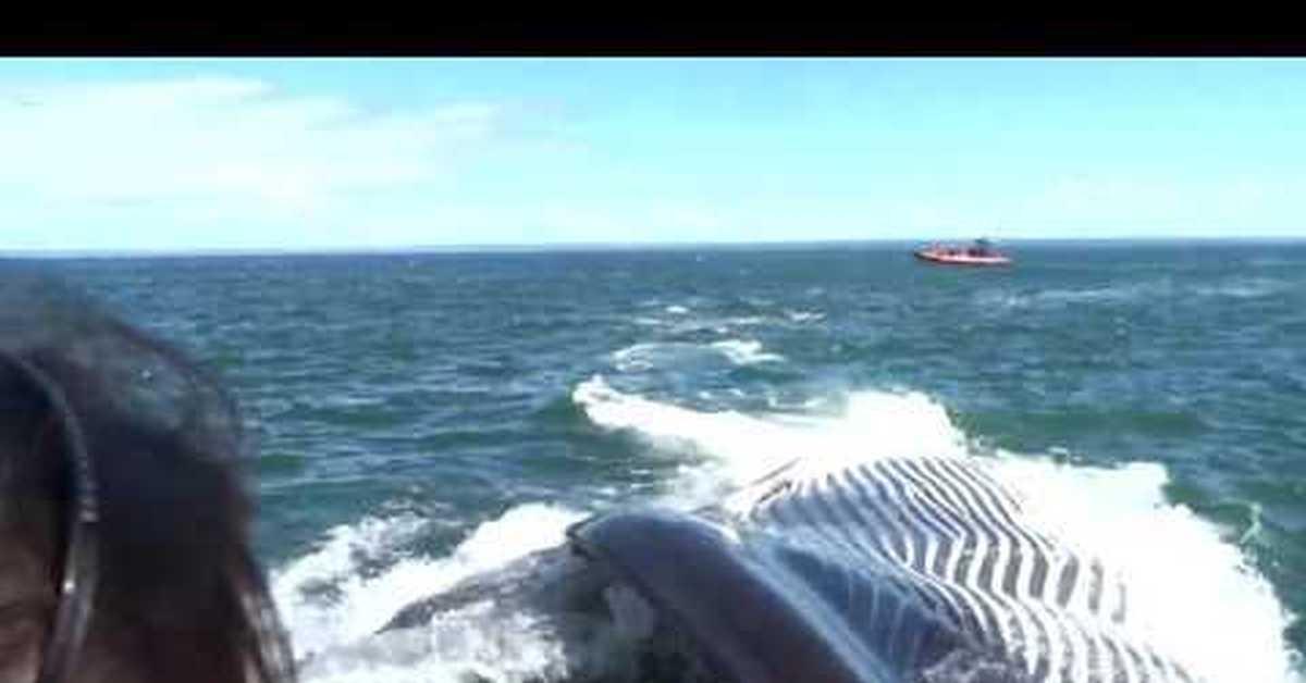 кит может проглотить лодку