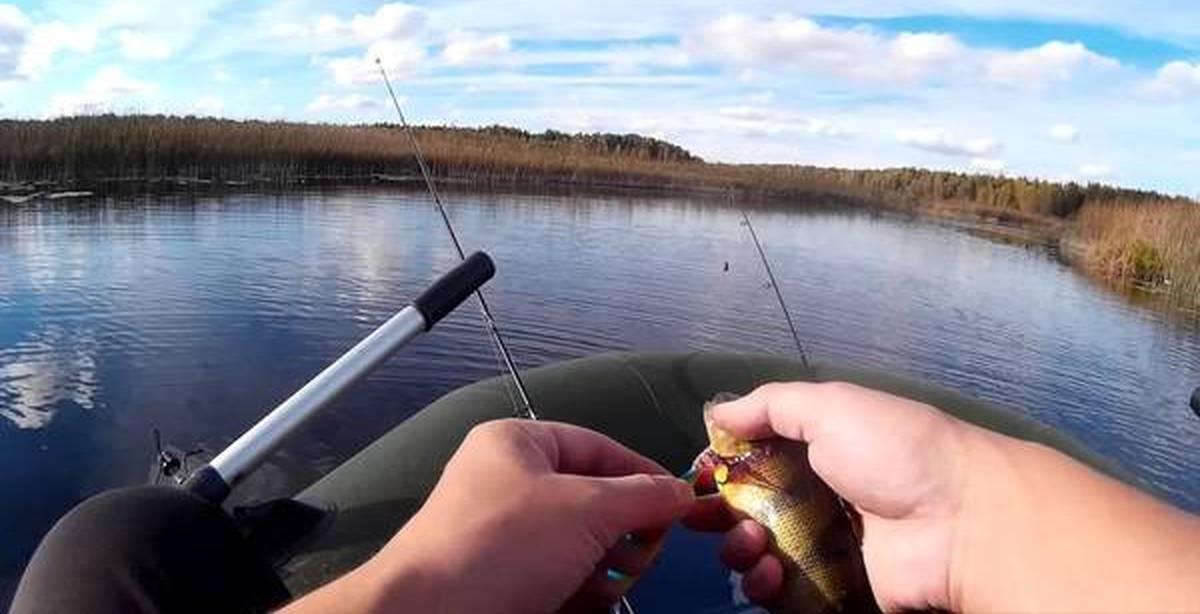 рыбалка спиннингом в октябре окунь щука