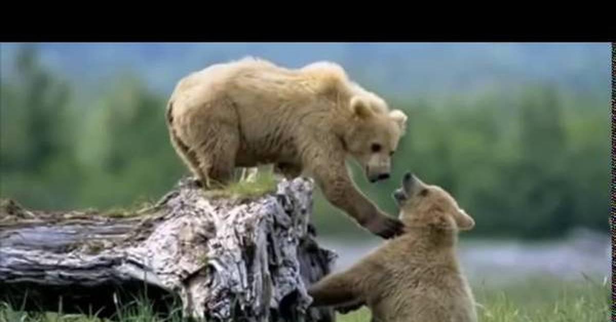 фото животные природа