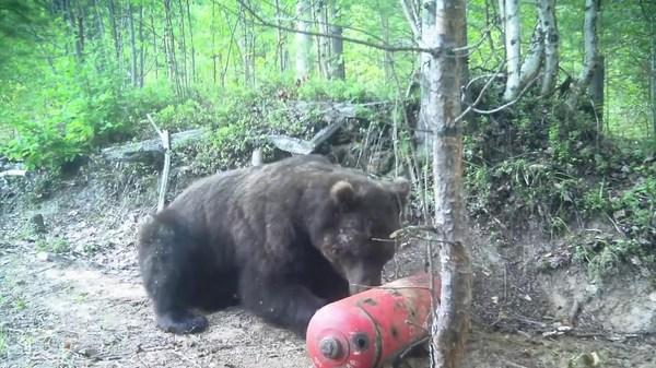 охота и рыбалка в якутии видео новое на медведя