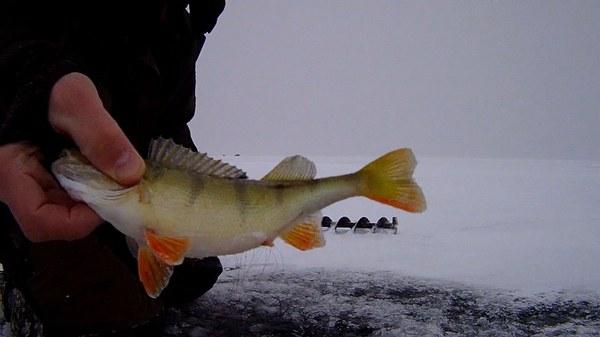 о рыбалке держи щуку братск